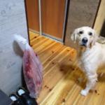 Рацион нашей собаки. Пикальное мясо и - опять Маня со своим хвостом.