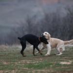 О чем говорят собаки? Портреты наших хвостатых спасателей.