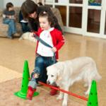 Собака-терапевт. Где их обучают?