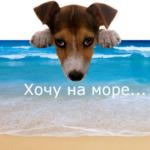 И снова тема отдыха с собаками. Мои результаты опроса владельцев гостевых домов.