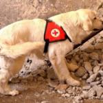 Очеловечить собаку. Собака-Партнер.