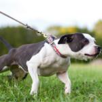 Очеловечить собаку. Почему у кинологов дети воспитанные