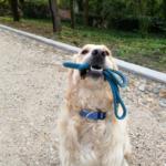 Амуниция для собак. Наши любимые поводки