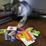 Как расплатиться на кассе кошкой