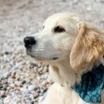 Минусы жизни с собакой