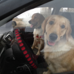 Ляля и Бетти едут в Москву