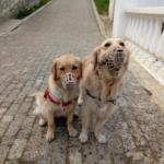 Как мы гуляем с собаками в условиях самоизоляции
