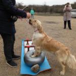 Выставка отменяется, но для наших собак это секрет