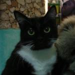 Психолог для кота. Как Кеша из бандита в нормального кота превратился