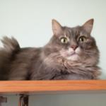 Случайный выбор кошки Маняшки. Старая статья на канале создает душевное настроение