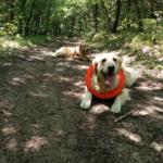 Как повлиять на нерадивого хозяина, не убирающего за своей собакой