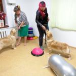 Фитнес для собак. Как Бетти личный подвиг совершила (много фото)