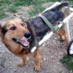 DogAngel проводит Стрим из приюта для собак