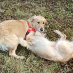 Аллергия на собаку - одна история со счастливым концом