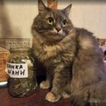Как наш папка на кошкины накопления покушался