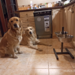 Как кормить собаку - высоко или низко? Рассказываю, почему мы отказались от высокой подставки