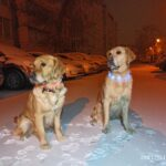 Снег! Снег! Тренировка!