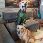 Рестайлинг комбинезона для собаки с дополнительной опцией