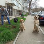 Как мы с собаками липу сажали