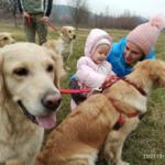 Сходно ли воспитание детей и собак