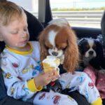 Как собаки устроили облаву на Санькины харчи, после чего Сандра выиграла 2 выставки