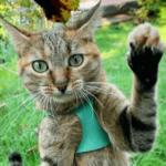 Рукопись готовится отправиться в издательство, а кошка советует мне укусить директора почты