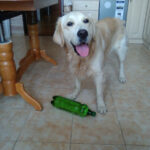 Собака и жара. Мой лайфхак для охлаждения собаки в квартире