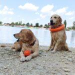 Мы едем на Марсианское озеро и встречаем собаку-рыбаку