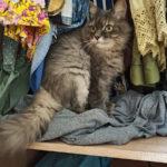 Трудно быть кошкой, или - Как Маняха себя из шкафа доставала