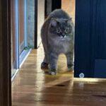 Кошкины комментарии - в дом пришли гости